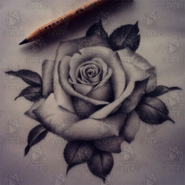 Tattoo Realistic rose drawing by Madeleine hoogkamer