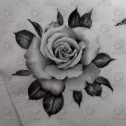 Tattoo Roses are grey by Madeleine hoogkamer